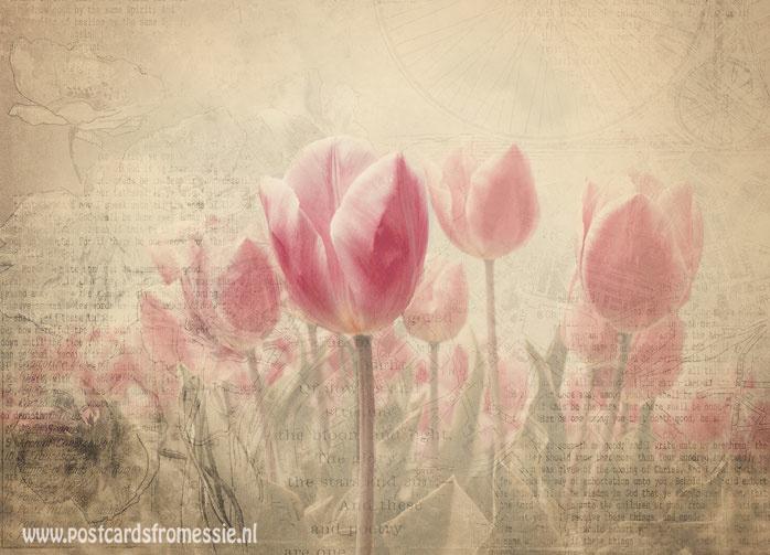 Sepia postcard - Tulips