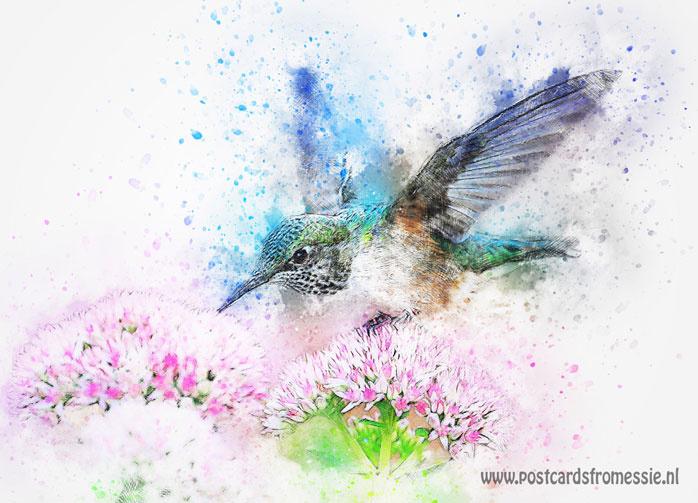 Aquarel ansichtkaart - Kolibrie