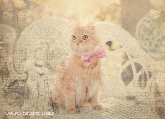 Sepia postcard - Cat