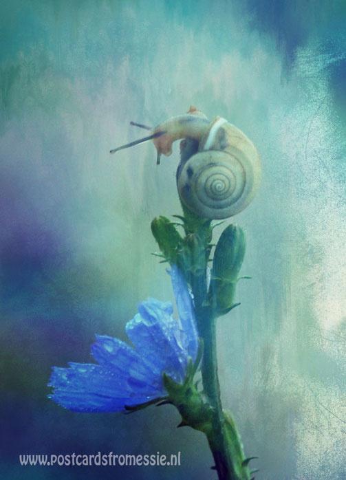 Bloemen - Slak op paarse bloem