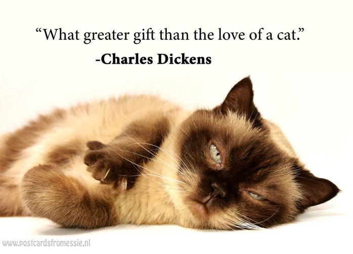 Katten quote 5
