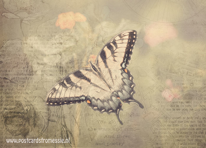 Sepia vlinder ansichtkaart