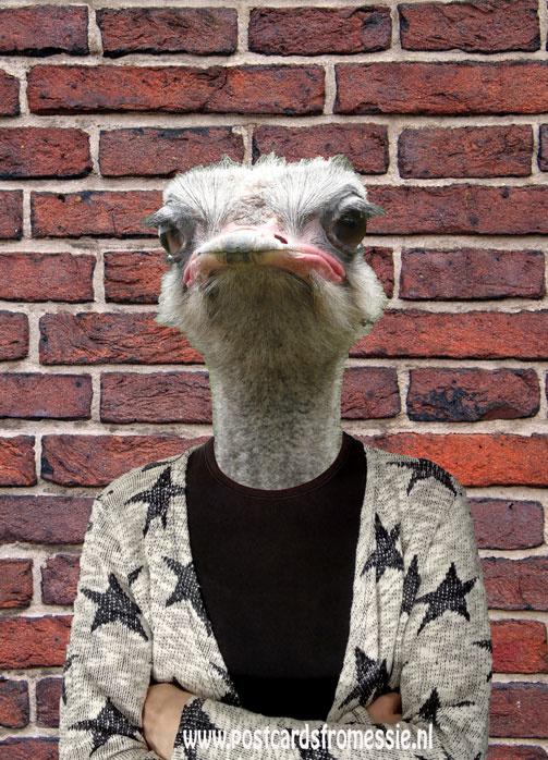 Struisvogel met vest