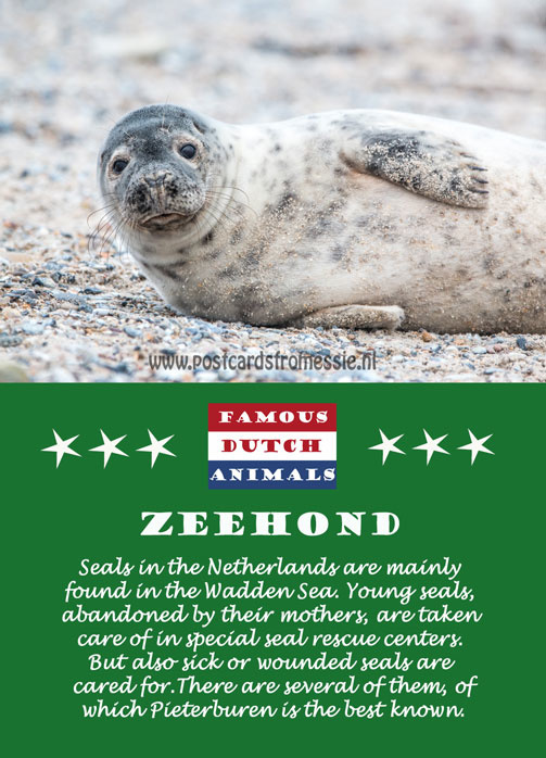 Famous Dutch Animals - Zeehond