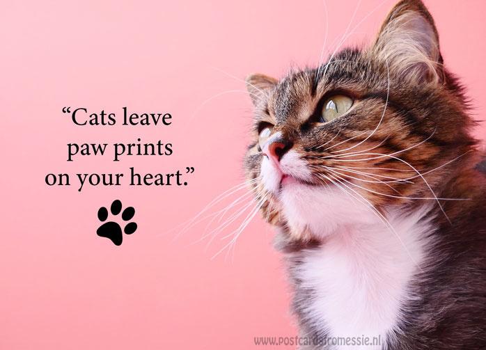 Katten quote 4