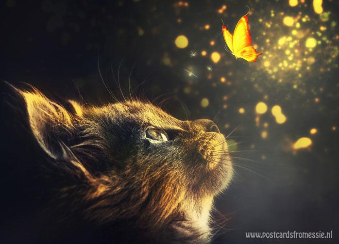 Kat ziet magische vlinder