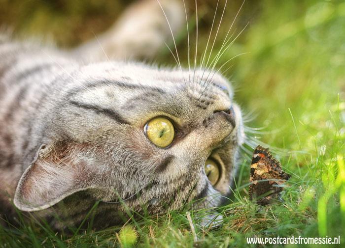 Kat en vlinder ansichtkaart