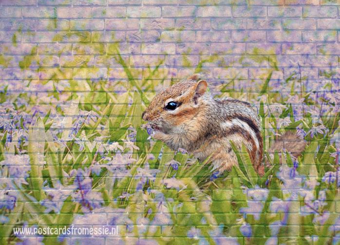 Muurkaart - Eekhoorn