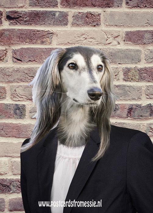 Dog with jacket