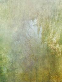 20190113 'The pond'