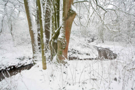 Essen Burgvallen Sneeuw