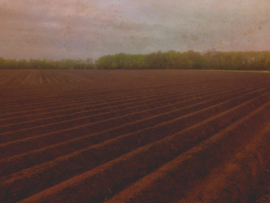20190427 'Ploughed field '