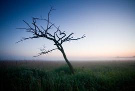 Okkenveen een boom