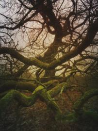 20180106 Oak tree