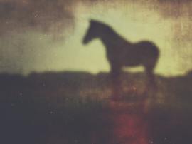 20171003 Horse