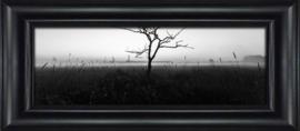 Okkenveen, een boom