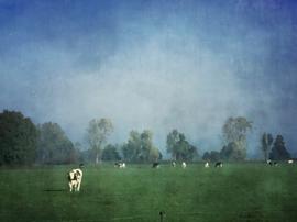 20171023 Cows Annermoeras