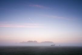 Groninger paarden in de mist