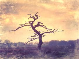 20190122 'Dead Oak Gasteren'