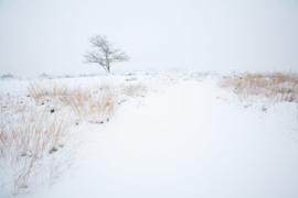 Gastersche Duinen in de sneeuw