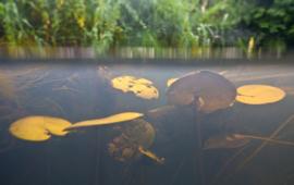 Drentsche Aa onder water 1