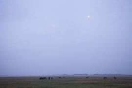 Paarden in Nieuwlandsreid Ameland
