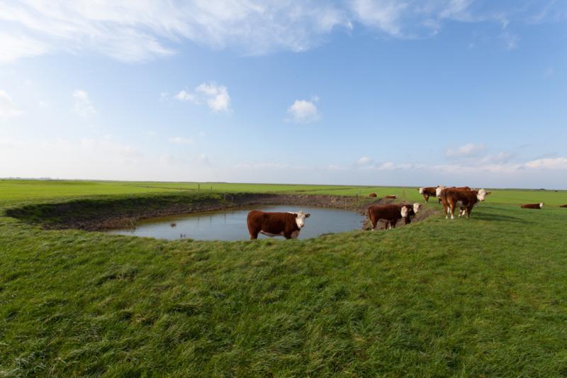 Dobbe Het Bildt Friesland
