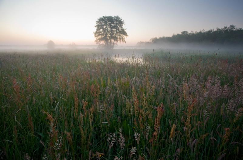 Okkenveen mist