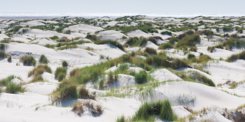 Texel De Hors Duinen