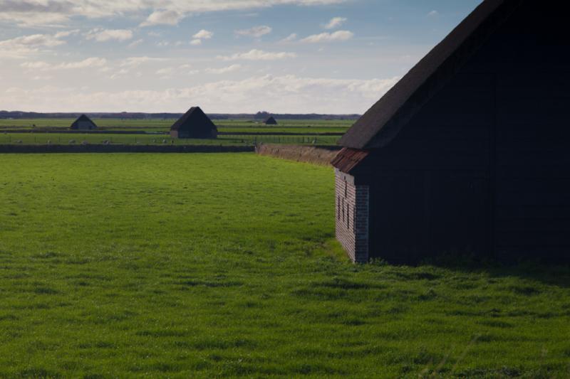 Texel Schapenboeten
