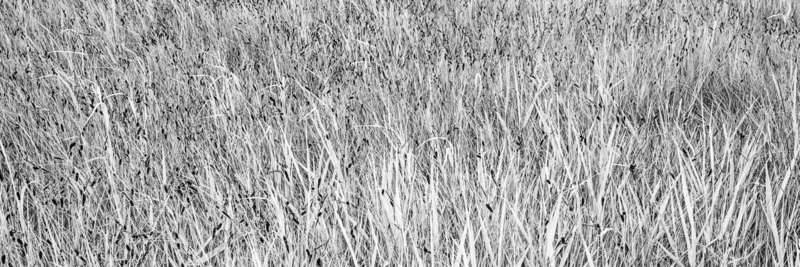 Grassen of zeggen