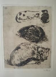 Ets poezen, Willem de Zwart 1862-1931
