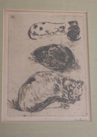Willem de Zwart 1862-1931, studie van poezen