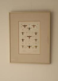 Antieke gravure insecten