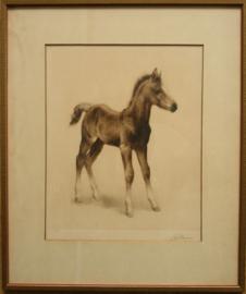 Eberhardt (1895-1977) ets van een veulen