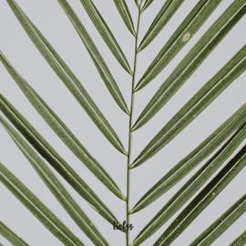 Magneet graspalmen - groen -7 x 7 cm