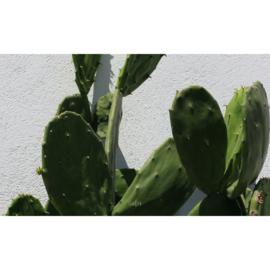 Binnenposter - Cactus - Groen (15 x 25 CM)