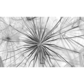Binnenposter - paardenbloem - Zwart (15 x 25 CM)
