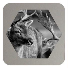 Hexagon - oh deer