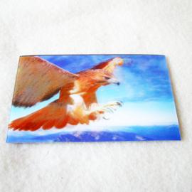 3d Koelkastmagneet roofvogel - D11791