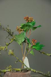 Guelder Rose Berry 58cm