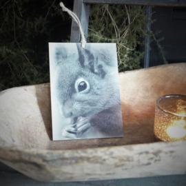Kalkverf mini paneel Eekhoorn