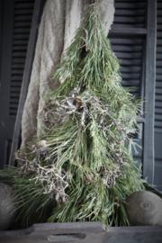 Pinus bonsai boompje 60cm