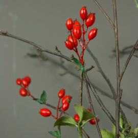 Rose Hip Spray 123cm