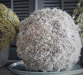 Euphorbia Ball round 40cm drsn.
