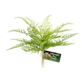 Naturalistic Flora – Lace Fern