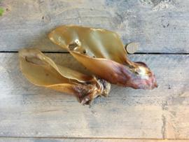 NATURE FINES Buffeloren met schelp 3 stuks