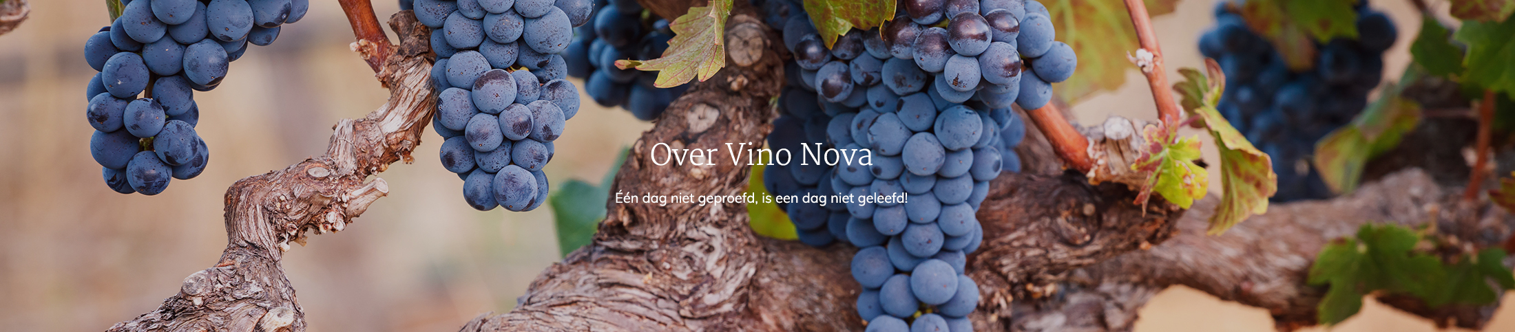 Over Vino Nova