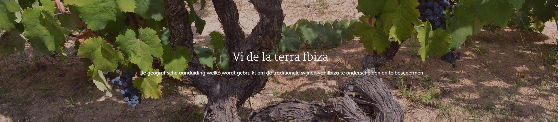 Vi de la terra Ibiza