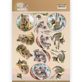 3D Cutting sheet - Amy Design - Wild Animals Outback - Koala CD11485